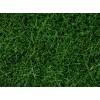 Дикая трава Noch 07106